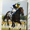 『競馬パネル:キングカメハメハ「2004年:第71回東京優駿」』
