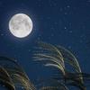今日はお月見!『中秋の名月』におすすめ!満月がモチーフのルクアイーレ大阪店限定ネックレス『FLUNA/フルナ』