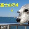❝富津岬(前編)❞ 愛犬とおでかけ-千葉県観光🎵  2021年2月23日①