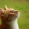 猫の手術がついに決定!手術の内容から手術日までにやることとは