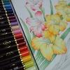ペリシア色鉛筆でグラジオラスを塗ってみました・花日和花だよりより