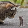 【雑想】猫と鼠の追っかけっこについて
