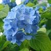 紫陽花の隠れ名所!霊験あらたかな京都善峯寺へご招待