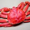 【北国からの贈り物】5kgの訳ありカニや帯広豚丼がお取り寄せできる北海道グルメサイト