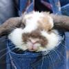 【ラビットラン】牧草エリアでの~んびりしたいのは 人かウサギか日本の心なのかを考える
