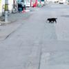 映画「世界から猫が消えたなら」を見てきた。