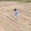 稲刈りday