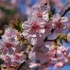 湯島天神・上野公園のお花見に!一人旅女子も安心&快適ホステル
