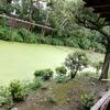 """ちょい旅日記:京都「渉成園」「京都水族館」 A record of my short trip: """"Shoseien"""",""""Kyoto Aquarium"""" in Kyoto"""