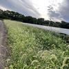 【太陽光の草刈】なるべく楽したい!!