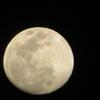 見た目で、満月ってどうよ!(?_?)