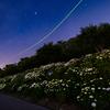 星景サルベージその89 ベガと紫陽花の夜 No.2
