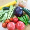 野菜の収穫に追われる。