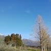 残雪の大谷山スノーシュー