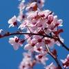 【お花見シーズンまもなく☆】簡単レシピで楽チン手作りおつまみ♪