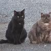 猫の物語とセイタカアワダチソウ