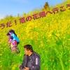 DJI Mavic ドローン 空撮 解禁『あ、そうだ!菜の花畑へ行こう②』