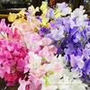 春の花スイトピー Sweet pea