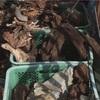 石や流木は、使う前に煮込むと安心します^ ^