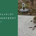 第476回 BOOKニュース:この本に注目!『さっぽろ野鳥観察手帖』
