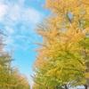 イチョウの葉はすっかり黄色に(^-^)
