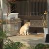 自由猫ダイちゃん、庭仕事の監督をする