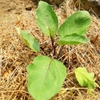 STAY HOME~夏野菜の植え付けや種まき
