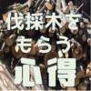 無料で配布される伐採木を取りに行く前に読むべき心得をまとめてみました