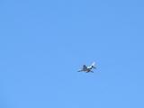 狭山丘陵で訓練機T-4と遭遇