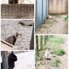近所の猫達のこと ①