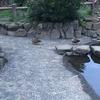 鶴ヶ久保公園でカモと記念撮影