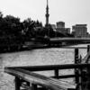 横十間川と東京スカイツリー
