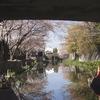 平成最後のツーリング 西日本2850Km Ⅶ  近江八幡宮:絶景 桜吹雪の八幡掘り巡り