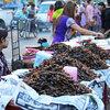 食通王国タイの「昆虫食」の不思議に迫ってみたい!