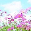 【387日目実績】カキシ5日目 ~有終の美?~