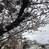 春。桜。花見。花粉。笑通勤途中で