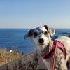 ❝魚見塚展望台❞ 鴨川ドライブ④  愛犬とおでかけ-千葉県観光🎵 2021年2月11日