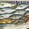 2月に日本海で釣れる魚👆 【  ボートゲーム / 釣魚のまとめページ  】 ※順次更新中
