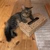 二世帯住宅&箱に入りたがる猫の話