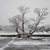 11月に雪!!