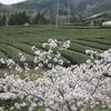 日本遺産の茶畑でアウトドア抹茶!宇治茶の主産地・和束町で「野点ピクニックセット」の貸し出しサービスを開始。