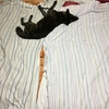 甲斐犬サンの疲れた時ーッの巻〜モウドウシタラ良イノヤラ( ´_ゝ`)