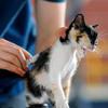 公務員獣医師の重要な役割を知ろう ~犬猫の飼い主が見た、加計学園問題(その8)~