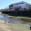 地図子、三沢川を歩く -1 多摩川との合流地点から長沼城・報恩寺跡地まで-