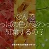 1110食目「なんで葉っぱの色が変わって紅葉するの?」赤色や黄色は栄養素の色です。
