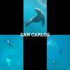 『MEXICO』アシカと泳げる!! 秘密にしておきたい観光地「サン・カルロス」