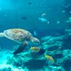 美ら海水族館 okinawa