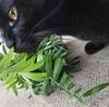 ◆黒猫 時々 猛獣