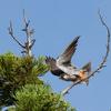 2019年8月24日の鳥撮り-長野県(1/2)