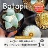 【明日がラスト!】Botapiiフリーペーパー大賞・受賞なるか